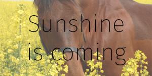 Sunshine is coming