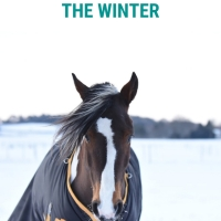 Tips to survive Winter at the yard